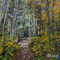 Artwork: Booth's Rock Trail - SOLD